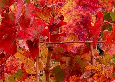 Rouge automne