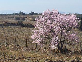GAURE MARS 2012 206