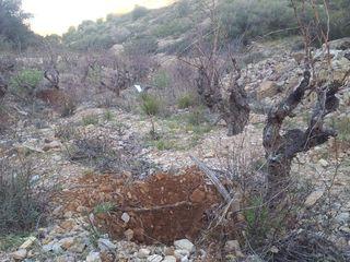 Le travail des Sangliers MARS 2012