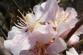Fleurs017
