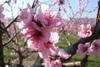 Fleurspecher5
